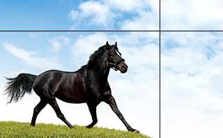 馬と1pxラインPhotoshop